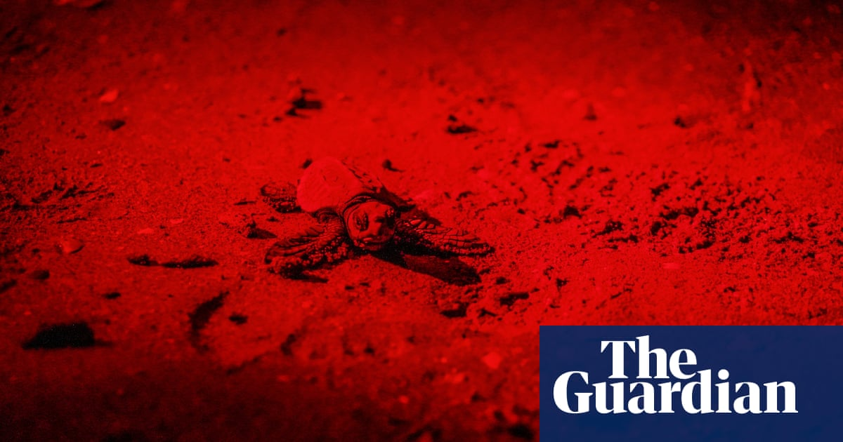 'Truly peculiar': loggerhead turtles born in most northern spot ever recorded
