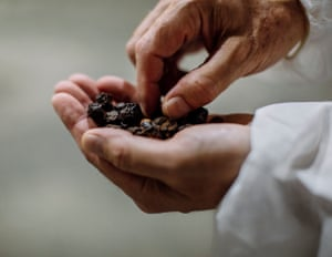 Larry McCarty, vice president of global manufacturing and supply chain holds dried berries that await the supercritical co2 extraction process, at Valensa International, a Florida based manufacturer.