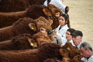 Stirling, ScotlandFarmers attend the annual Stirling Bull Sales event, one of the biggest in the UK, which runs over two weeks at United Auction. Around 12,000 British and international farmers, commercial buyers and pedigree enthusiasts are visiting the city for the event, which will feature ten pedigree breeds