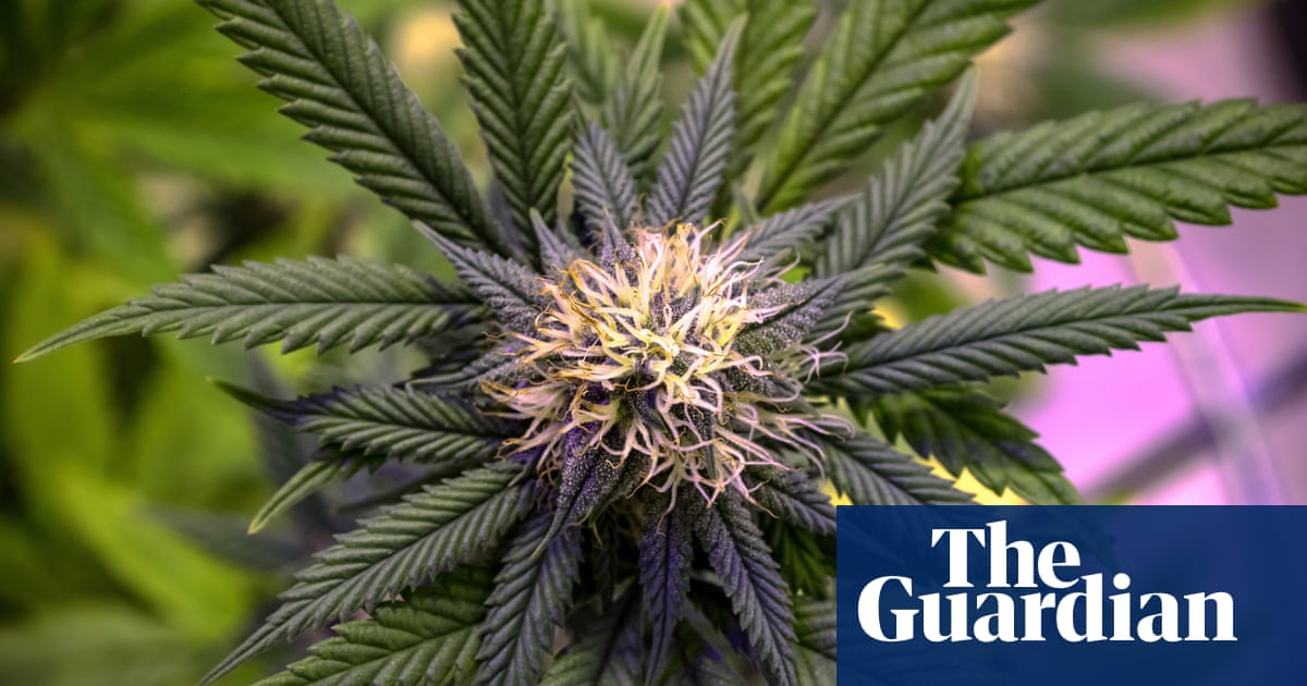 post-image-Medicinal cannabis: the hype is strong, but the evidence is weak