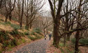 Walkers under the bare trees heading down to the bridge over the Buchan Burn near Bruces Stone, Galloway