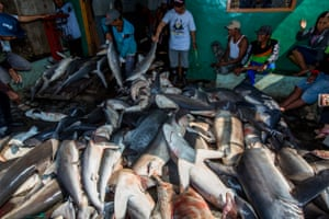 Shark fishermen in Indonesia