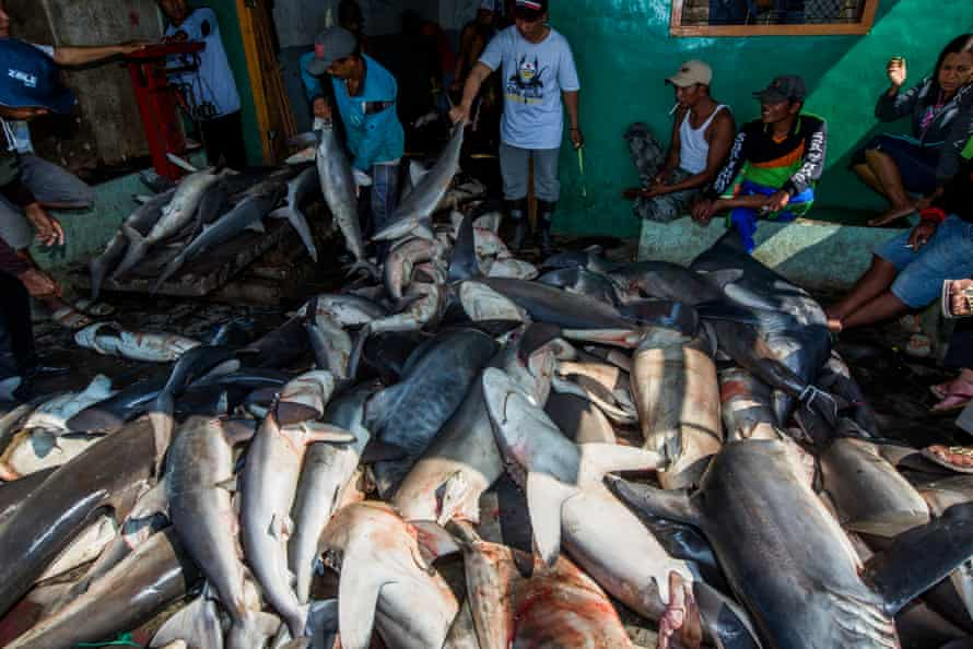 Shark fishermen in Indonesia
