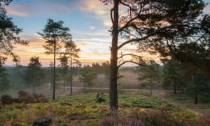Early morning view at Frensham Flashes in Surrey, England