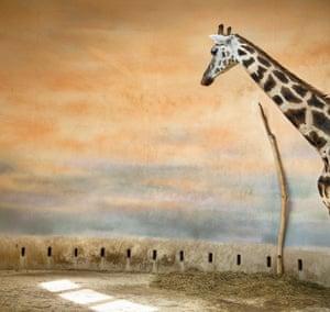 Giraffe Light
