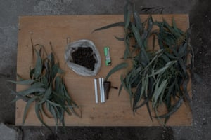 Diaz gathers eucalyptus leaves and tobacco on his table