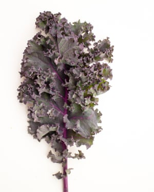 'Red Russian' kale.