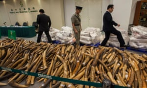 Hong Kong authorities with what they say is the world's largest ever seizure of ivory, found in a container from Malaysia