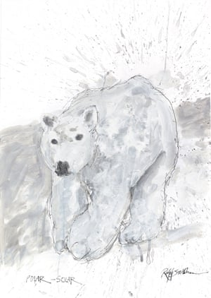 Polar Bear by Ralph Steadman