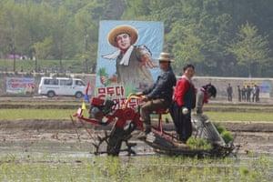 Farmers transplant rice seedlings in a field in Chongsan-ri, Kangso district of Nampho, North Korea