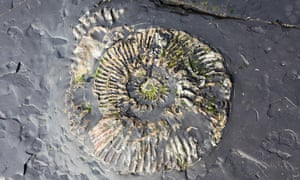 Ammonite Fossil in Kimmeridge shale, Purbeck Dorset<br>GN6JCY Ammonite Fossil in Kimmeridge shale, Purbeck Dorset