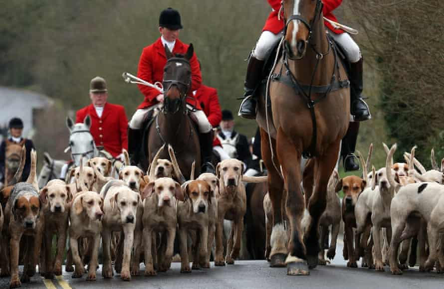 Horse riders and hounds on a fox hunt