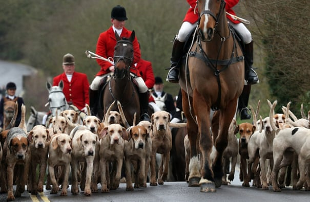 POLL: Should fox hunting legislation be repealed in the UK?