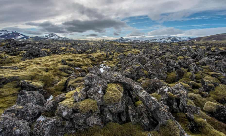 Moss-covered lava fields in western Iceland