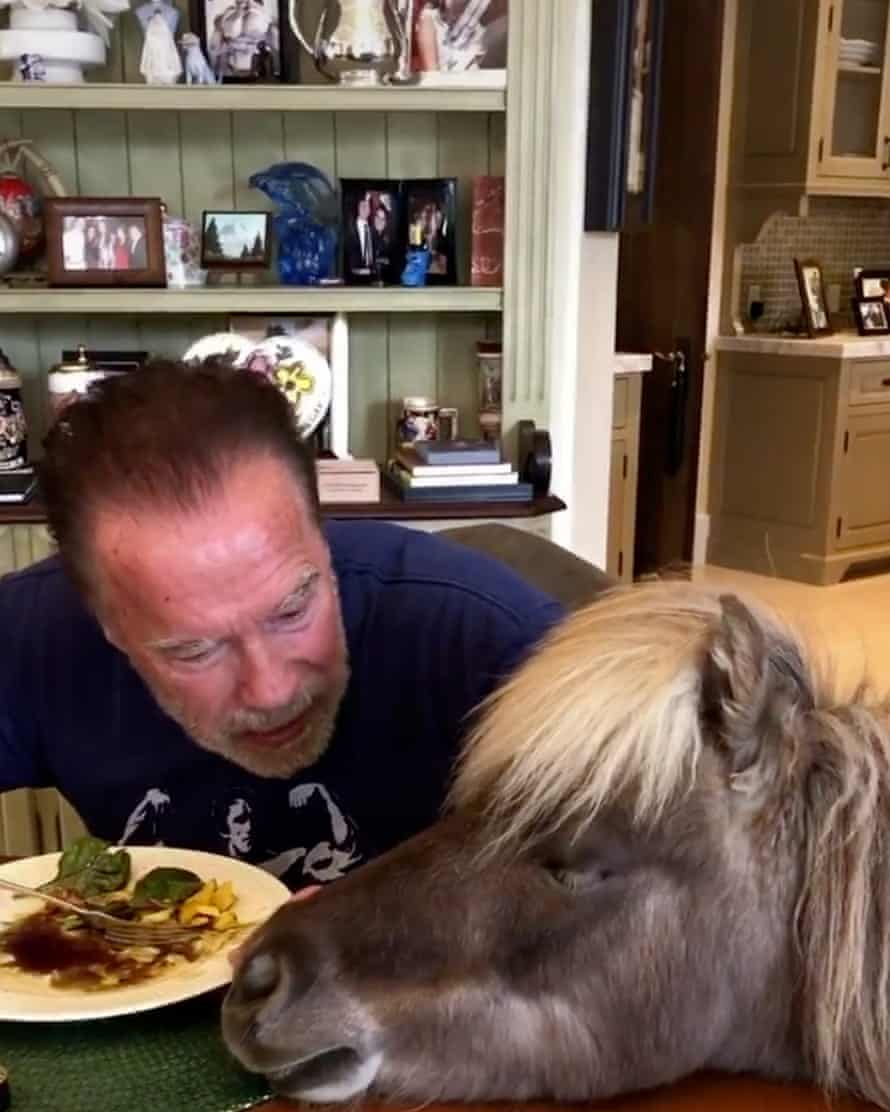 Little donkey … Arnold Schwarzenegger has dinner with one of his pets on the family ranch.