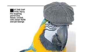 Macaw wearing a cap