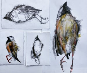 Four sketches of dead finches