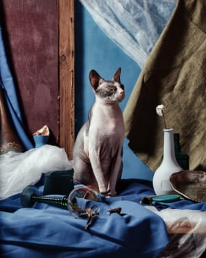Portraits of cats by photographer Igor Kryukov.