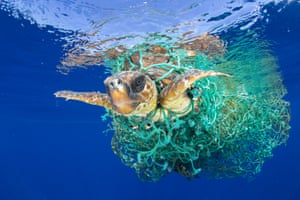 Nature – singles, first prize  A sea turtle entangled in a fishing net swims off the coast of Tenerife in the Canary Islands