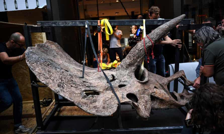 Workers bring the triceratops' skull into the gallery where it is going on show