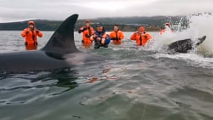 Employees of the Russian Emergencies Ministry rescue a baby orca stranded in the Sea of Okhotsk off the Russian Pacific coast.