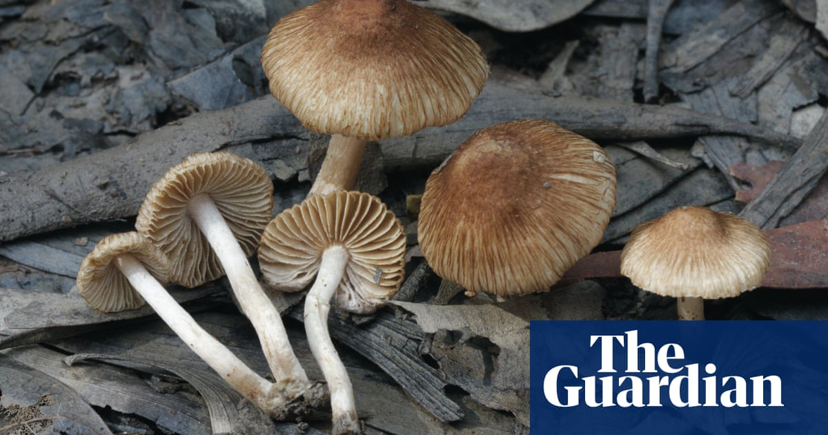 New edible mushrooms among thousands of recently discovered