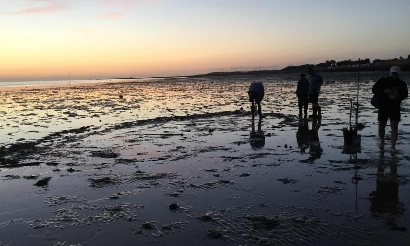 Tudor shipwreck discovered by local group on Kent beach