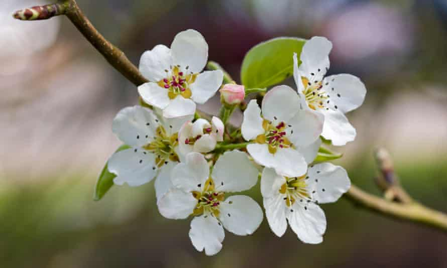 The UK has a rich history of biological recording by scientists and 'citizen scientists' who document the first signs of spring