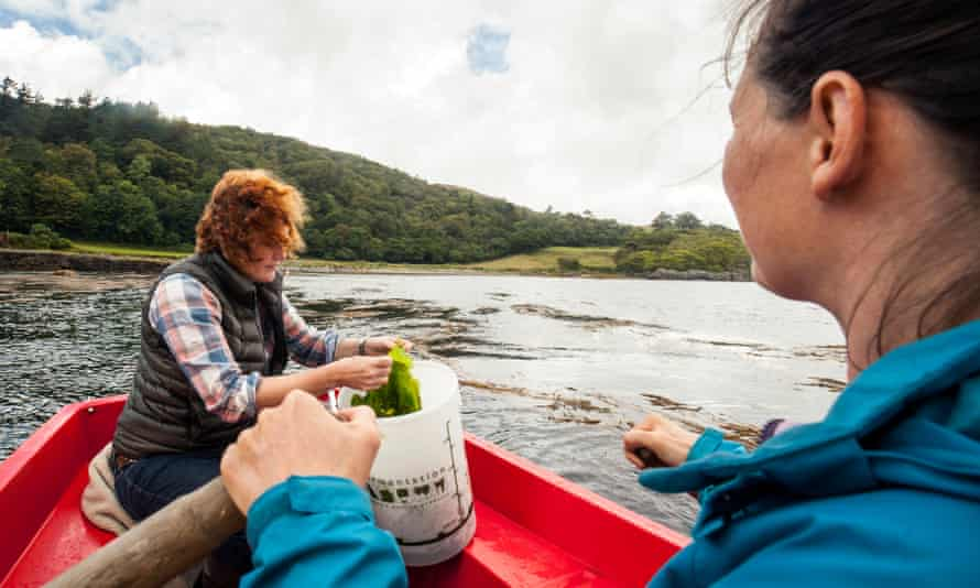 Claire Fletcher (left) collecting sea lettuce, a botanical used in Lussa gin