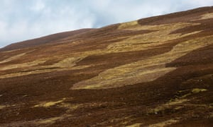 Evidence of previous muirburn on grouse moors by the River Dee.
