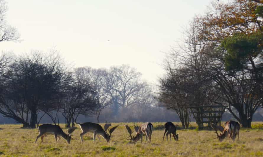 Deer at Knepp, Sussex, UK.