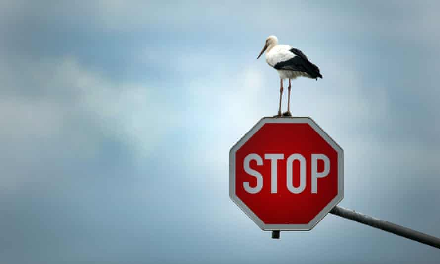A stork perches on a sign in Germany. France also uses the English word, but to little effect it appears.