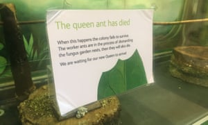 'The queen ant has died' sign at London's Natural History Museum