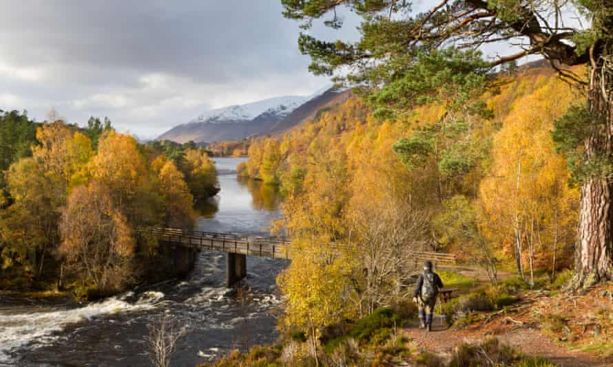 A hiker in Glen Affric amid Autumn-coloured trees, Highlands, Scotland.