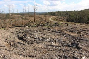 Land clearing in the Lorne state forest on the mid-north coast of NSW.