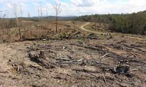 Land clearing in a NSW state forest