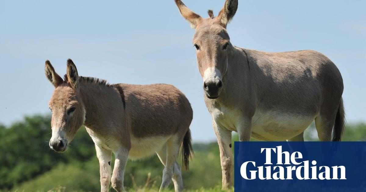 Donkeys to help re-establish rare wild flower in Devon