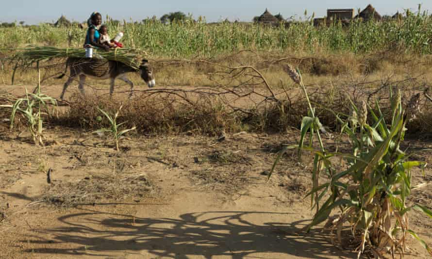 Successive droughts, like those seen in sub-Saharan Africa, could cause millions to migrate to cities.