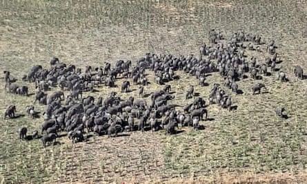 Elephants in Nigeria
