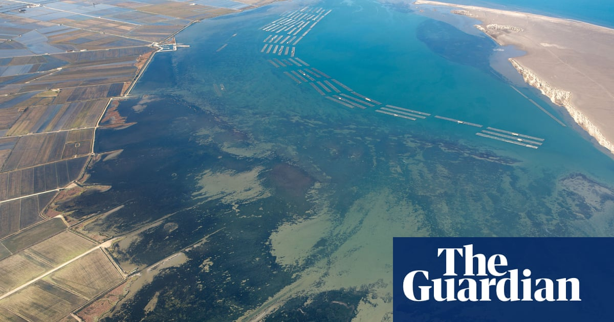 Delta blues: why estuaries are the canaries in the climate crisis coalmine