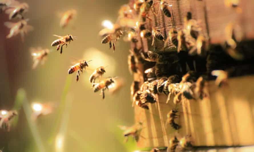 Honey bees in the spring sunlight