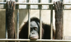 At roadside zoos, some animals live their entire lives behind bars, in cages made of concrete. Roadside zoos generally provide less enrichment for the animals and less education for their public.