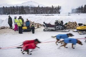 Dogs in Kristy Berington's team leave Takotna, Alaska, Thursday, March 12, 2020, during the Iditarod Trail Sled Dog Race.