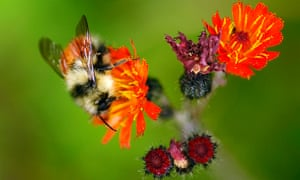 Honeybees alone are responsible for boosting the production of fruits, nuts and vegetables. But bee and other pollinator populations in the US have been in decline in recent years.