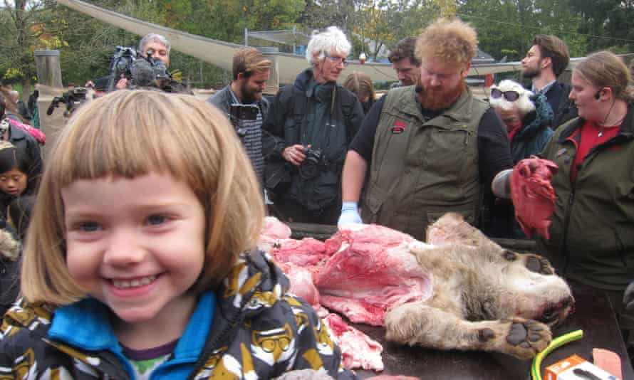 Writer Richard Orange took his three-year-old daughter Eira to a lion dissection at Odense Zoo in in Denmark.