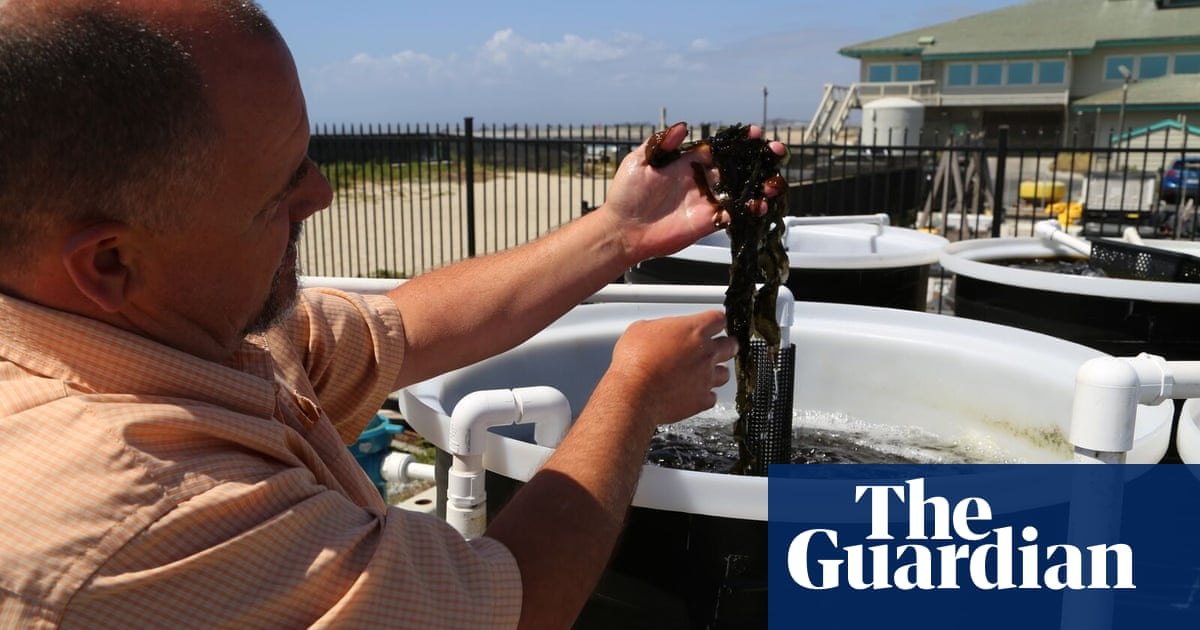 Meet the new US entrepreneurs farming seaweed for food and