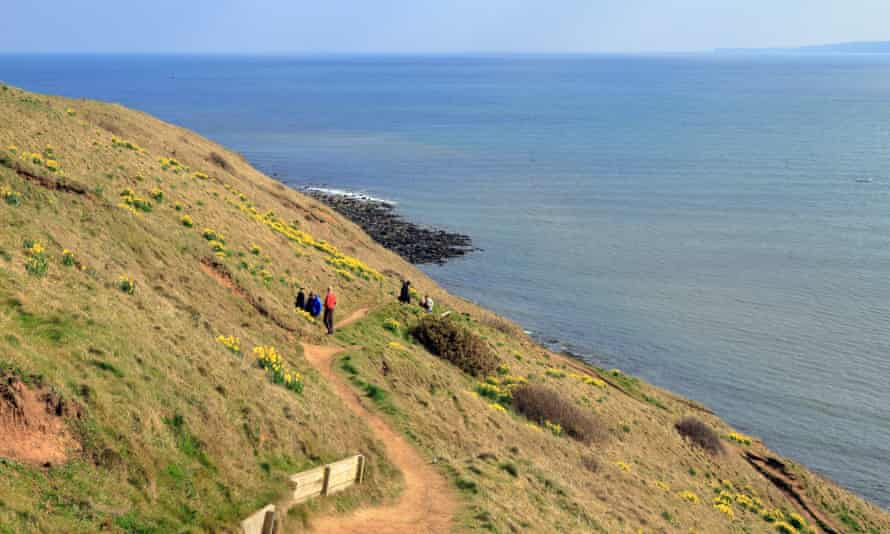 Walkers on a path by daffodils on Filey Brigg, natural rock promontory, Filey, North Yorkshire