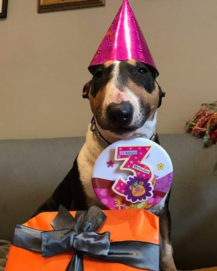 Bull terrier Prudence turns three.