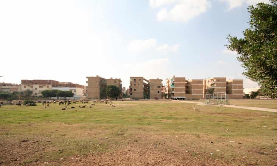 Sheep graze in public space around standard five-storey public housing blocks in 10th of Ramadan
