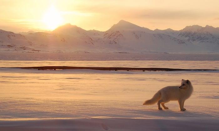 9 Out Of 10 Alaska Nurses Say Theyve Seen Or Felt >> The Battle To Protect Alaska S Great Wildlife Sanctuary Rebecca